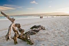 Gente que se vuelve de la playa idílica en la puesta del sol Foto de archivo