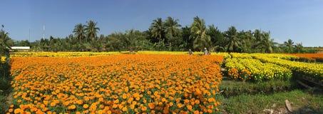 Gente que trabaja en campos de flor de la margarita Fotos de archivo libres de regalías