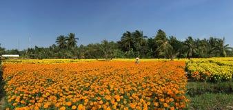 Gente que trabaja en los campos de flor de la margarita Fotografía de archivo libre de regalías