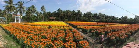 Gente que trabaja en los campos de flor de la margarita Fotos de archivo libres de regalías