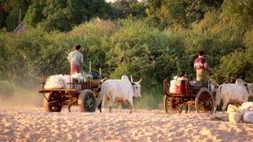 Gente rurale birmana che guida sul vagone di legno estratto dai bufali asiatici myanmar video d archivio