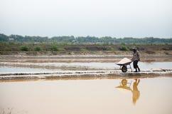 Gente tailandese che tiene sale dall'agricoltura del sale Immagini Stock