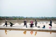 Gente tailandese che tiene sale dall'agricoltura del sale Fotografia Stock Libera da Diritti