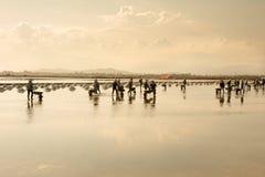 Gente vietnamita que trabaja en el campo de la sal Imagenes de archivo
