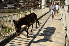 Gente y burro en un puente en Berat Imagen de archivo
