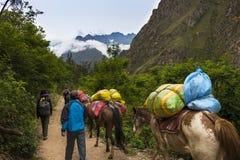 Gente y caballos que llevan mercancías a lo largo de Inca Trail, en el valle sagrado, Perú Foto de archivo libre de regalías
