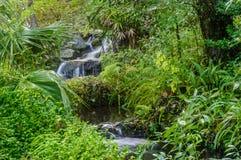 Gentel-Wasserfall durch das tropische Holz Stockfotos