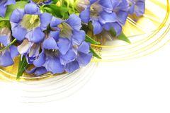 Gentian Stock Photo
