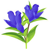 Gentian - birth flower vector illustration in watercolor paint. Birth flower vector illustration in watercolor paint textures vector illustration