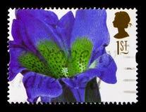 Gentiana acaulis Ehret,皇家园艺学会serie,大约1997年 免版税库存图片