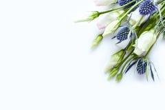 Gentiane de prairie et mer Holly Flowers sur le fond de livre blanc pour des invitations ou des cartes de voeux Photographie stock libre de droits