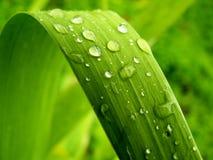 листья gentile Стоковые Фотографии RF
