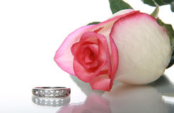 Gentile rose and wedding ring Stock Photography
