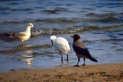 Gentille société d'oiseaux sur la plage photo libre de droits