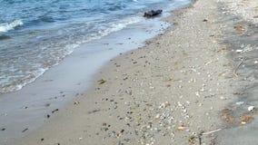 Gentle волны приезжая на тропический пляж видеоматериал