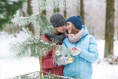 Gentle поцелуй в древесине зимы накануне рождества Стоковая Фотография RF