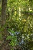 Gentle подача реки Hockanum в Манчестере, Коннектикуте Стоковое Фото