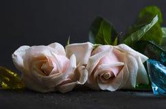 gentle розовая Стоковые Изображения