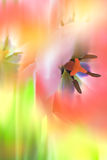Gentle Abstract Flowers background, colorful Stock Photography
