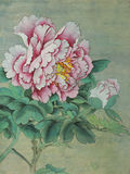 Gentle And Delicate Peony Flower Royalty Free Stock Photos