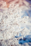 Gentle background of dry grass covered with snow Stock Image