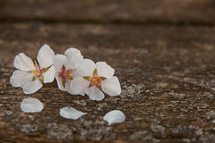 Gentle background in vintage style. With flower Royalty Free Stock Photos