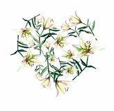 Gentle beautiful heart of white beige powdery lilies watercolor hand sketch. Perfect for greeting cards, textile, wallpapers stock illustration