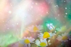 A gentle blue butterfly on a daisies flower in nature in soft pastel colors with a soft focus, macro. Dreamy, romantic, elegant, stock photography