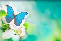 A gentle blue butterfly on a fluffy tree flower in nature in soft pastel colors with a soft focus, macro. Dreamy, romantic, royalty free stock images