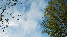 Gentle blue sky of fall, timelapse. Blue sky of fall, time lapse, framed by branches. Copy space stock video