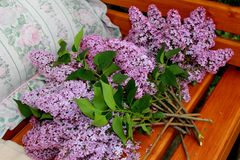 A gentle bouquet of lilac. royalty free stock image
