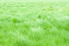 Gentle breeze in a meadow field. Stock Photos