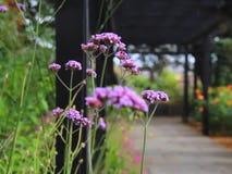 Gentle breeze on wild meadow flowers stock video