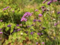 Gentle breeze on wild meadow flowers stock video footage