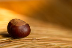 The gentle colors of autumn. A chesnut in the golden light of autumn Royalty Free Stock Image