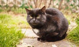 Home pet. Black green-eyed cat Stock Photos
