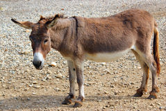 Gentle donkey Stock Photos