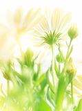 Gentle floral background Royalty Free Stock Photos