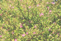 Gentle floral background. royalty free stock images