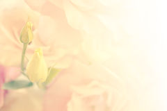 Gentle Flowers Background - vintage colors Stock Images