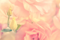 Gentle Flowers Background - vintage style Stock Photo