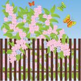 Gentle flowers and multi-colored butterflies Royalty Free Stock Photo