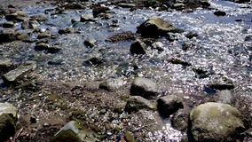 Gentle flowing stream in full sunlight. stock video