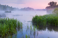 Gentle Foggy morning near the river Royalty Free Stock Photos