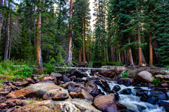 Gentle Forest Stream. Stream running through the forest at Turquoise Lake, CO Royalty Free Stock Images