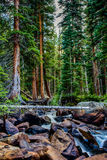 Gentle Forest Stream. Stream running through the forest at Turquoise Lake, CO Stock Photo
