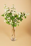 Gentle fragrant flowers of jasmine in vase Royalty Free Stock Photos