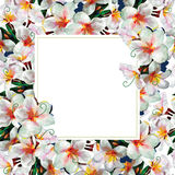 Gentle frame with plumeria flowers. And white background stock illustration