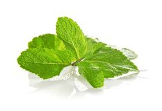 The gentle fresh branch of spearmint Stock Photos