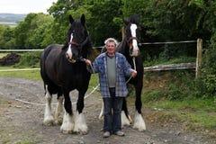 Gentle Giants Royalty Free Stock Photography